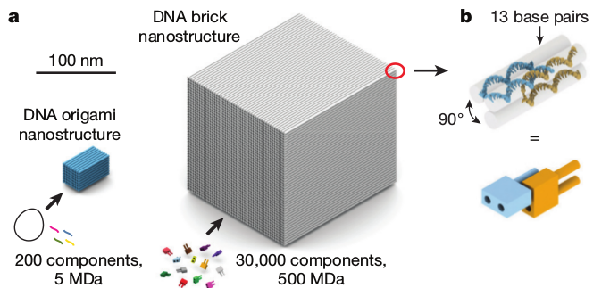 dna-lego1.png